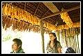 indigeni uwa