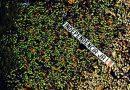 Cataluña: gasolina al fuego. [Parte II]